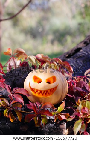 Halloween pumpkin in autumn leaves on the burnt tree
