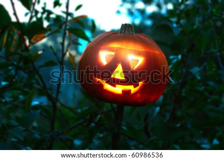 Halloween pumpkin in the forest of bushes