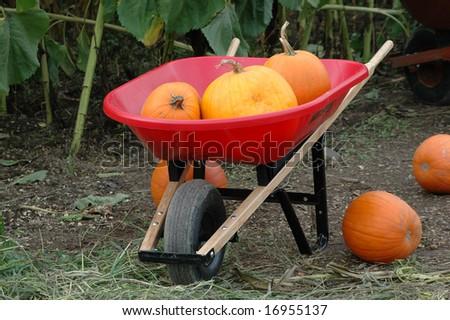 Halloween pumpkin patch farm. #16955137