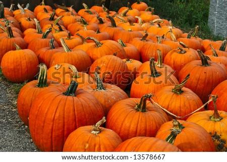 halloween pumpkins for sale
