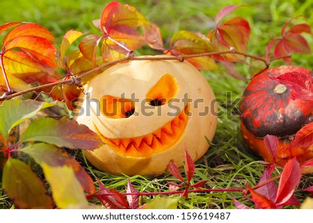 Halloween pumpkins in autumn leaves, close up