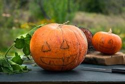 Halloween scary pumpkin with a smile in autumn garden. Preparation for celebration. Preparing pumpkin for halloween. Jack-O-Lantern. Making pumpkin decor for Halloween