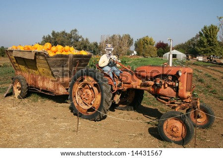 halloween setting with stuffed dummy on tractor carrying pumpkins