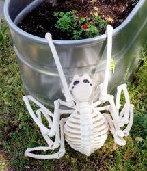 Halloween skeletal pest attacking early spring planter. Fun. Humor.