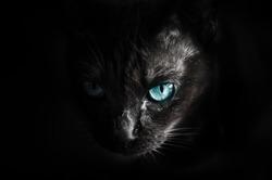 Halloween Theme, Cat scared eye scary in dark background