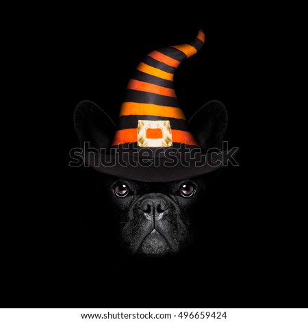 halloween  witch french bulldog  dog  dressed as a bad devil with horns, isolated on black dark dramatic background