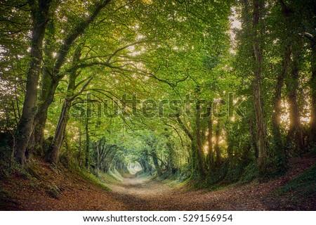 Halnaker ancient green lane in West Sussex in autumn #529156954