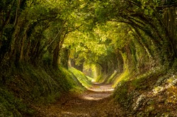 Halnaker tree tunnel in West Sussex UK with sunlight shining in through the branches. This is the original Roman road from London to Chichester. Light at the end of the tunnel concept