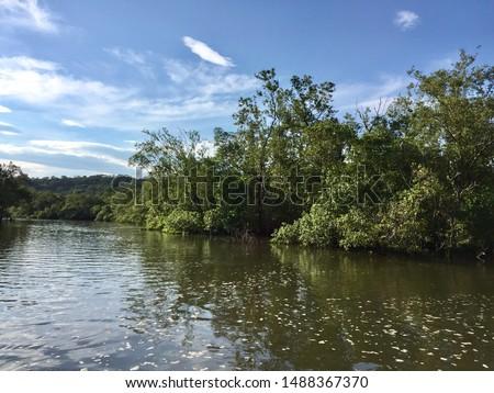 Halophilic vegetation on the coast of Paraná, Brazil. Guaraqueçaba. Muddy formations.