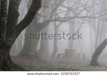Halt in misty forest