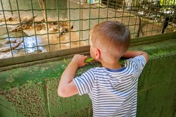 HAMAT GADER, ISRAEL. August 20, 2016. A little Caucasian boy with a toy crocodile looking at the real reptiles behind the fence in the Hamat Gader crocodile farm zoo.