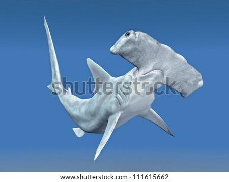 Hammerhead Computer generated 3D illustration