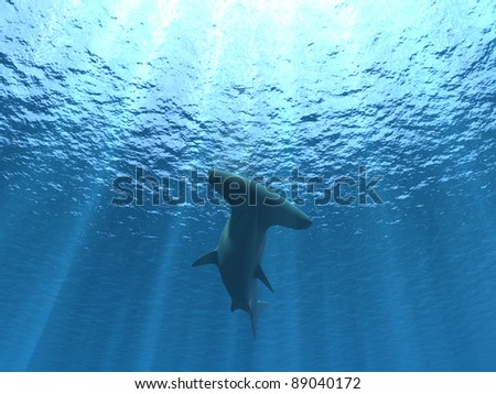 hammerhead shark under water