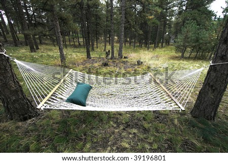 hammock hanging in wooded area