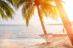 hammock on a palm tree sunset glare of the sun sea ocean sky shore sand