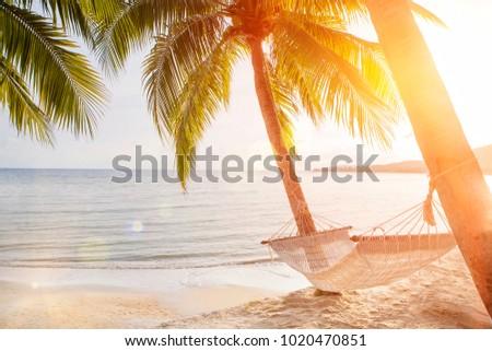 hammock on a palm tree sunset...
