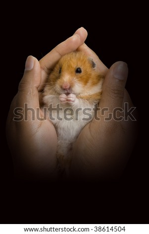 Hamster being held in a woman's hands
