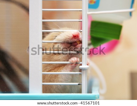 Hamster chewing cage
