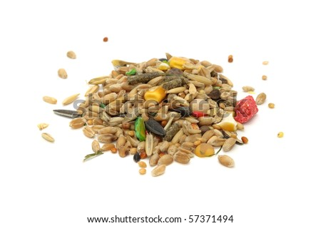 Hamster Diet and Nutrition
