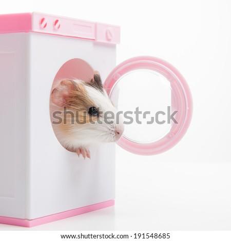 Hamster. Funny hamster sitting in washer