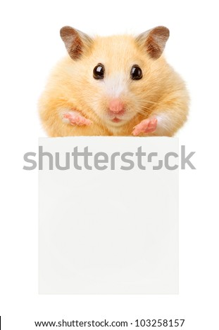 Hamster hold empty paper isolated
