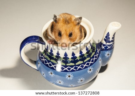 Hamster in a colorful old jug for tea.