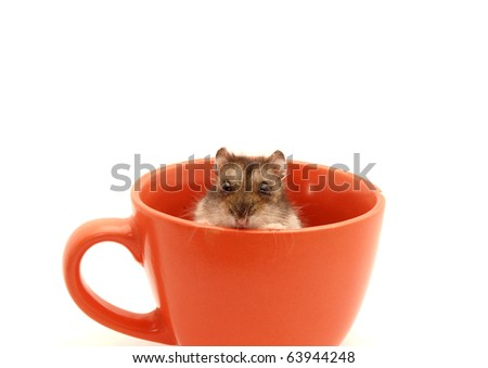 Hamster in a cup on a white background