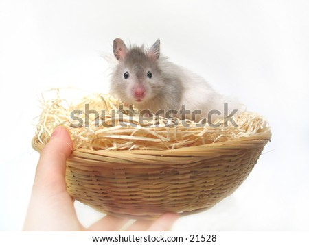 Hamster in a easter basket