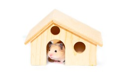 Hamster in a lodge isolated on a white background. House for small pet rodents. Exotic animal. The concept of investing in housing, mortgage.