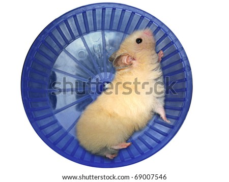 Hamster in a wheel over white background