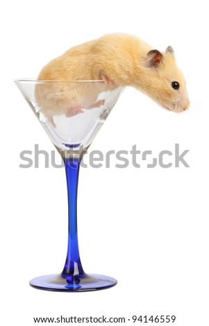 Hamster in glass isolated on white