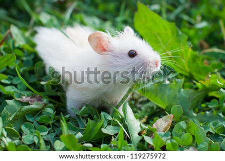 hamster in the grass