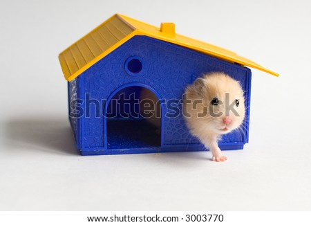 Hamster in the toy house