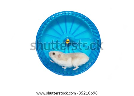 hamster in the wheel. Routine