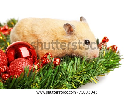 Hamster on fir branch isolated
