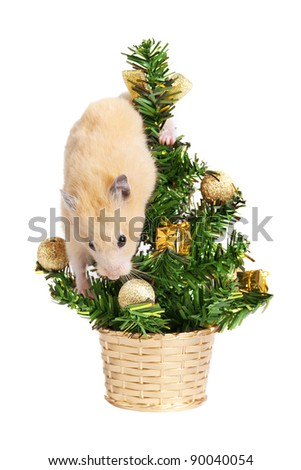 Hamster on the christmas tree isolated on white - stock photo