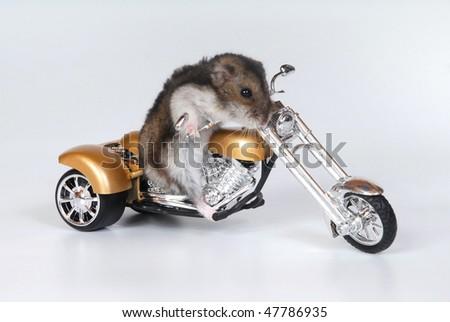 hamster on the trike
