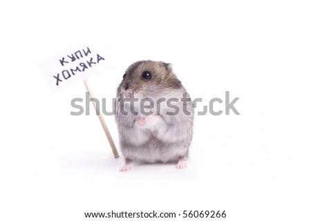 Hamster on the white isolated background