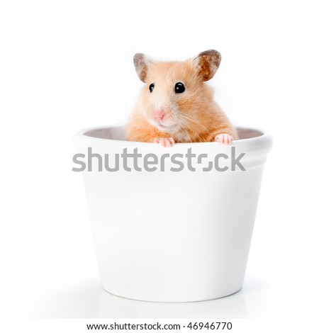 hamster peeking out of a white cup