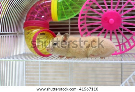 Hamster peeps out of the cell