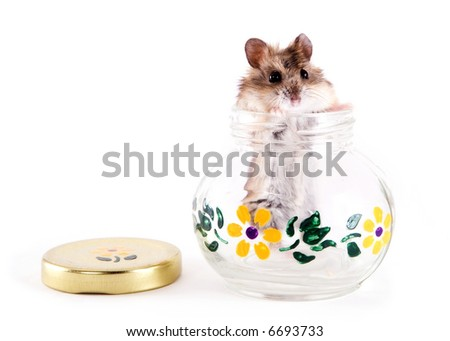 Hamster poking his head out of a glass jar.