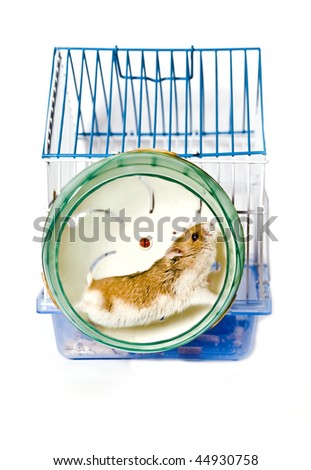 hamster running in the wheel