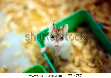 hamster sitting in a wooden house