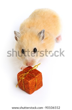 Hamster with present isolated on white
