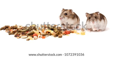 hamsters, dwarf hamsters, hamsters on a white background