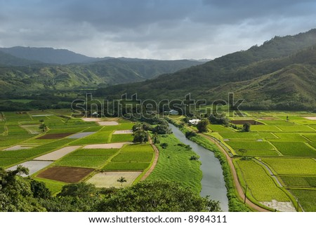 Hanalei River flows through the Taro fields near the historic Haraguchi Rice Mill on Kauai, Hawaii. The fields are illuminated by sunlight filtering through storm clouds.