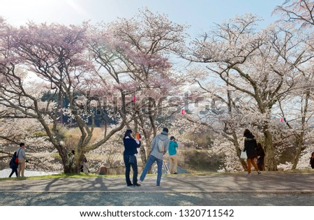 Hanami is a popular leisure activity in spring, when Japanese people admire the  beauty of cherry blossom (sakura) trees & enjoy the time with friends & families, in Koriyama, Fukushima, Tohoku, Japan