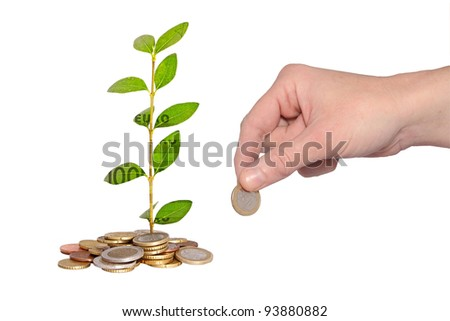 hand adding coin to money plant