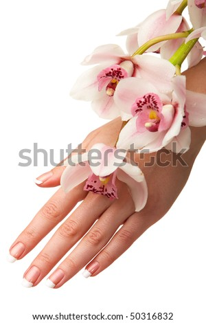Hand and orchid over isolated white background