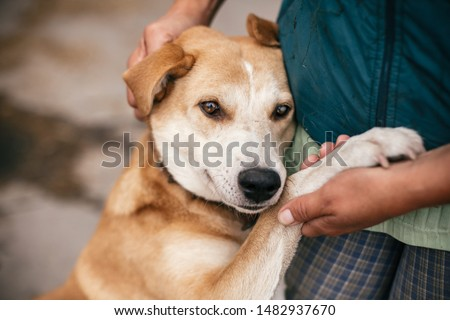Hand caressing cute homeless dog with sweet looking eyes in summer park. Person hugging adorable yellow dog with funny cute emotions. Adoption concept.